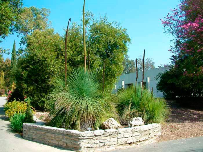 plantas ideais para as áreas comuns dos condomínios
