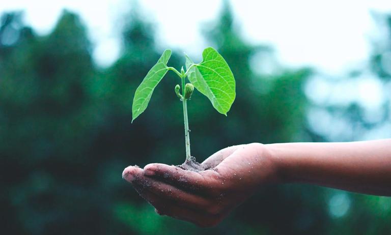 Horta cultivada em condomínio ajuda crianças a enfrentarem a pandemia em Assis