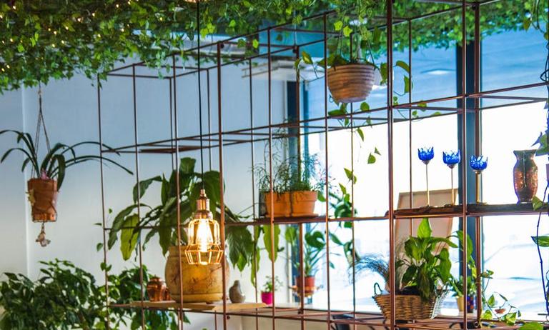 Como fazer um jardim vertical na sua casa ou no seu apartamento