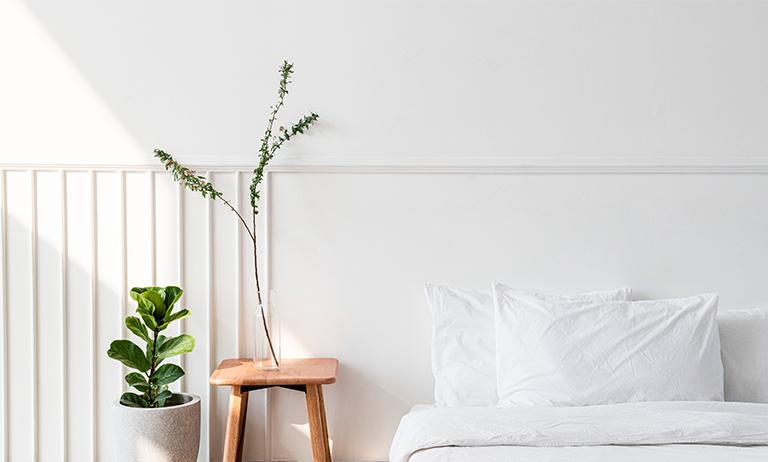 Plantas no quarto: quais tipos ideais para ajudar no sono